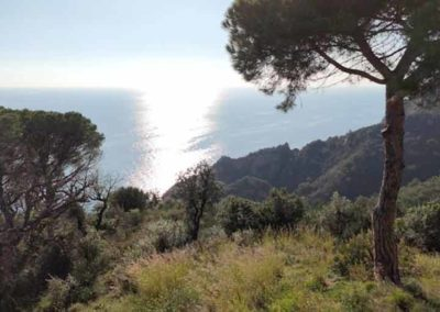 Motorcycle Coast Ride - nature